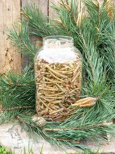 Abc Mojej Kuchni: Syrop z sosny Yummy Drinks, Healthy Drinks, Home Remedies, Natural Remedies, Homemade Liquor, Fermentation Recipes, Edible Wild Plants, Polish Recipes, Fat Burning Foods