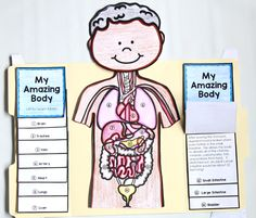 Human Body Project for Kids - Primary Theme Park - body art Human Body Activities, Learning Activities, Activities For Kids, Toddler Learning, Body Parts For Kids, Body Parts Preschool, Human Body Systems, Projects For Kids, Art Projects
