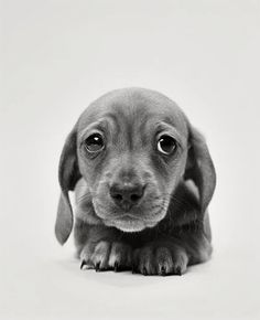 I can't resist a cute puppy. Especially one that looks like it needs a hug. =)