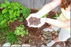 Composting 101- Learn How to Compost.