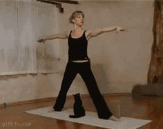 34 GIFs Of Cats Attacking