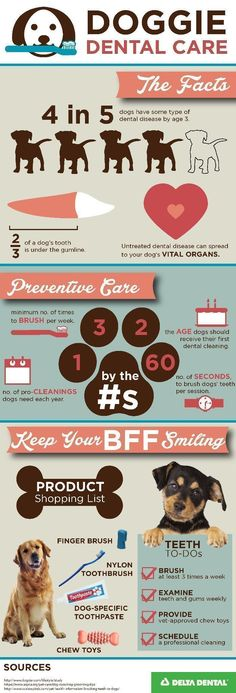 Make sure Fido and Fluffy have healthy chompers! Use this handy infographic! // KaufmannsPuppyTraining.com // Kaufmann's Puppy Training // dog training // dog love // puppy love // #ad #huntinginfographic #doginfographic #dogtraining