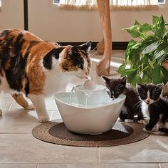 For The Cute Little Kids! Lotus Pet Fountain