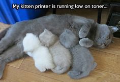 Kitty printer… balls, animals, kitten, funny pictures, funny cats, funni, grey, shade, ray ban sunglasses
