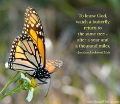 To know God, watch a butterfly return to the same tree -  after a year and a thousand miles.  - Jonathan Lockwood Huie