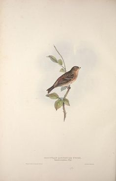 v. 3 - The birds of Europe. - Biodiversity Heritage Library