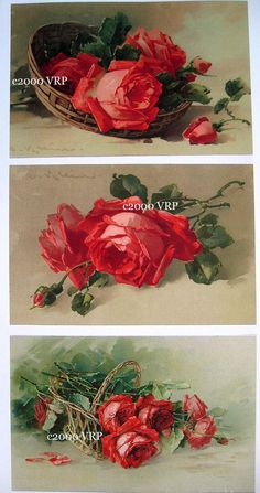 (Original as re-pinned) Print FREE SHIP 3 Prints Cabbage Roses by VictorianRosePrints, $11.99