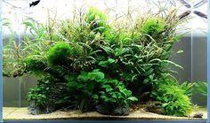 Awesome planted tank ------------------------------------------------ #aquascape…