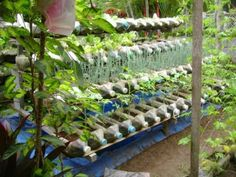 Plastic Bottle Gardening  This is amazing – a garden in thePhilippinesthat uses recycled plastic bottles to create a high yield in a small space, without a ton of water.