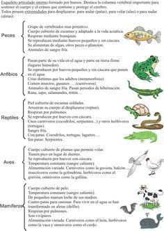 Escuela bloguera: LOS ANIMALES VERTEBRADOS