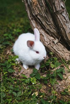White Baby Rabbit On The Grass by Brkati Krokodil - White - Stocksy United Hunny Bun, Animals And Pets, Cute Animals, Cute Buns, Easter Pictures, Best Friends, Beautiful Pictures, Wildlife, Creatures