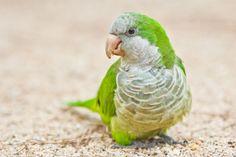 Parakeet in the Park by glenn bemont on 500px