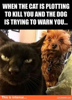When the cat is plotting to kill you and the dog is trying to warn you…this scene is intense...