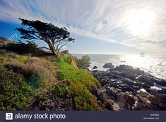 Monterey Cypress, Rocky Point, Cypress Trees, Pacific Ocean, Tattoo Ideas, Coast, Stock Photos, Mountains, Beach