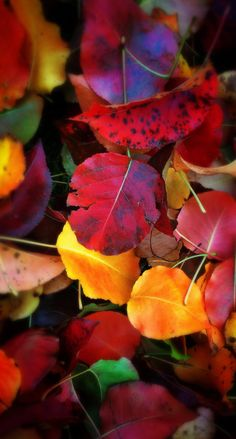 Leaf Photography, Autumn Photography, Fall Wallpaper, Nature Wallpaper, Autumn Scenery, Color Harmony, Fall Pictures, Leaf Art, Autumn Leaves