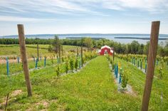 Eileanan Brèagha Vineyards in Marble Mountain is the first and only estate winery on Cape Breton Island. Situated on a 200 acre property overlooking the beautiful Bras d'Or Lakes, this well-established vineyard has been producing high quality, award winning grapes since the early 1990s. 2014 is the first year they are producing their own wines and I want to share that I was lucky enough to have the opportunity to partake in a pre-opening taste and it's was fantastic! Pre Opening, Cape Breton, Culture Travel, Nova Scotia, One And Only, 1990s, Lakes, Acre, Opportunity