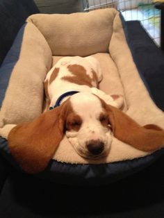 """""""I am a dog, and I am tired!"""""""