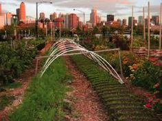 city farming - Google Search