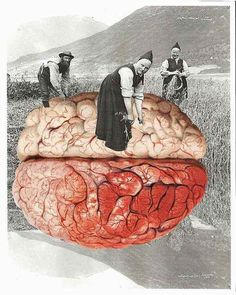 Loving this selection of collages, almost 'Pythonesque' in their concept. Scientific Re-Illustration by collage artist and book illustrator Lynn Skordal. Collages, Collage Artists, Surrealist Collage, Matthieu Bourel, Eugenia Loli, Brain Art, Kunst Online, Natural Sleep Aids, Image Digital