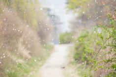 [Fall, the petals] 대한민국 No.1 감성채널. 얼라우투(www.allowto.co.kr)