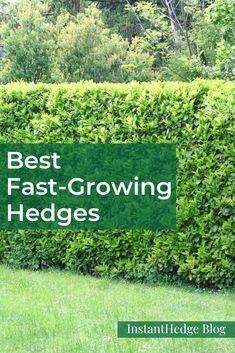 The fastest growing hedges provide privacy as quickly as possible by becoming tall and thick in just a few seasons. These are all good for growing as large hedges for privacy. Privacy Hedges Fast Growing, Shrubs For Privacy, Fast Growing Shrubs, Fast Growing Evergreens, Planting For Privacy, Best Trees For Privacy, Arborvitae Landscaping, Privacy Landscaping, Thuja