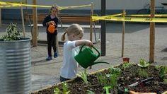 Die Rückeroberung der Parkplätze: Junge Städter entdecken ihre grünen Daumen – mitten in Zürich spriesst Gemüse auf temporären Freiflächen -...