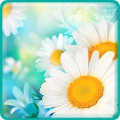 Daisies Live Wallpaper for Android