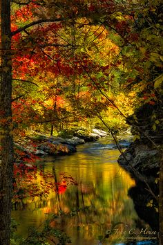 Autumn Afternoon in Cherokee National Forest ~  © Copyright John C. House,