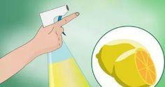 repulsif a chat : Répulsif huile essentielle citron/eucalyptus  Un quart d'eau, 10 gouttes d'huile essentielle de citron et 20 gouttes d'huile d'eucalyptus, c'est ce que vous devez mélanger dans un bouteille avec un vaporisateur pour ensuite l'appliquer sur le canapé.