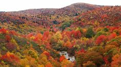 Leaves in NC mountains will be colorful 'even longer' this year