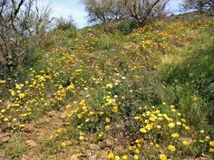 Great wildflower viewing in early April. Come and visit. www.sedonavacations.com   See you soon!