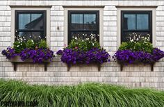 Window Planter Boxes With Purple Flowers : Decorative Outdoor Flower Window Planter Box Window Shelf For Plants, Window Planter Boxes, Planter Ideas, Outdoor Shelves, Modern Window Treatments, Cascading Flowers, Purple Flowers, Sun Flowers, Comment Planter