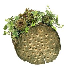 ...succulents and ivy in DIY log planter...
