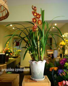 #plantas #macetas #barro #artesanal #mx #floreria #orquidea #orchids #cymbidium