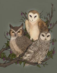 Owl art by Jessica Roux Subject Of Art, Owl Graphic, Owl Illustration, Owl Photos, Animal Totems, Owl Art, Woodland Creatures, Art Drawings, Art Prints