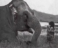 L'elefante e la bambina