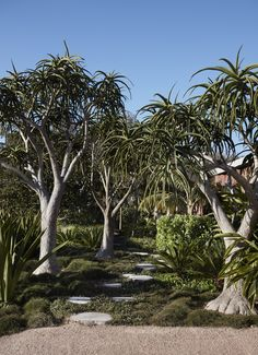 Garden Landscape Design, Garden Landscaping, Australian Garden, Most Beautiful Gardens, The Design Files, Country Estate, Native Plants, Coastal Gardens, Architecture