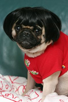 Only repinning this because it's a pug. And they totally have him in a Build A Bear shirt.