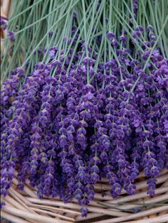 [ Visual Inspiration: Lavender ] ~ from Wishful Thinking
