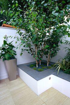 Planting a Silver birch - easy to grow Garden Spaces, Home And Garden, Container Plants, Front Garden, Garden Design, Modern Landscaping, Silver Birch, Contemporary Garden