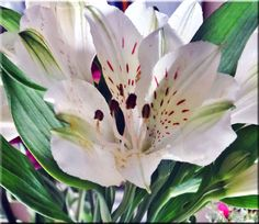 https://flic.kr/p/AhH3BE | 060 The Gift of Flowers 4