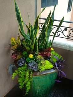Indoor Container planting (can summer outdoors) of Sansevieria (Mother-in-law's Tongue), succulents (Hen & Chicks), Coleus, Tradescantia Fluminensis (Purple Heart), Codiaeum variegatum (Croton) and more