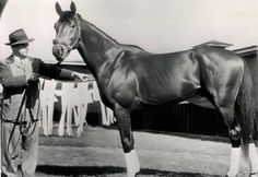 Today in Horse Racing History – April 12, 1948: After winning seven consecutive races, Citation lost the Chesapeake Trial Stakes by a length to Saggy, but rebounded to post 16 consecutive victories, including the Triple Crown.  8th U.S. Triple Crown Champion in 1948 U.S. Horse of the Year in 1948 Hall of Fame in 1959 #3 – Top 100 U.S. Racehorses of the 20th Century by Blood-Horse Magazine Honored with the Citation Handicap at Hollywood Park Racetrack