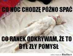 I tak robię to dalej :) Weekend Humor, Wtf Funny, Pranks, Quotations, Haha, Motivational Quotes, Cute Animals, Jokes, Pictures