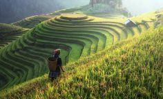 Découvrir la vallée de Muong Hoa Valley au nord du Vietnam (Sapa) et qui se trouve parmi les plus beaux paysages dans le monde. Un moment inoubliable.