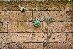 Inspiration für Ihre Gartengestaltung: Eine Mauer mit Pflanzen als Hingucker. Mehr Ideen gibt's auf tulpenbaum.at Inspiration, Green Living Rooms, Plants, Gardening, Ideas, Biblical Inspiration, Inhalation