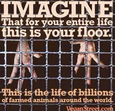 #farm365 farmers, please help me understand. Is this photo accurate? And if so, why?