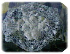 Orvieto lace