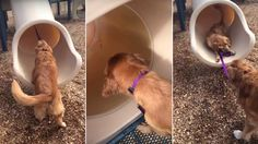 Follow my leash! Watch this sly dog turn his puppy pal into a slide dog