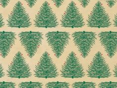 EVERGREEN KRAFT Recycled Tissue240~20'x30' Sheets Tissue Prints (1 unit, 240 pack per unit.) *** Click image for more details.